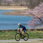 木崎湖畔の桜